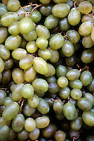 FOOD GROUPS: FRUIT<br /> Green Grapes