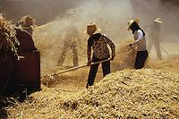 Hui women during wheat harvest, Qinghai, China, 2007