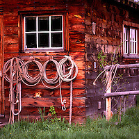 Cowboy Lassos and Ropes hanging in a Row on Side Wall of Old Weathered Wood Cabin / Ranch Building - Rustic Cowboy House