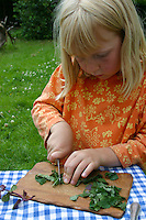 Kinder bereiten Kräuterquark mit verschiedenen Kräutern aus dem Garten, Mädchen schneidet Pfefferminze und Brennnesseln, Kräuter