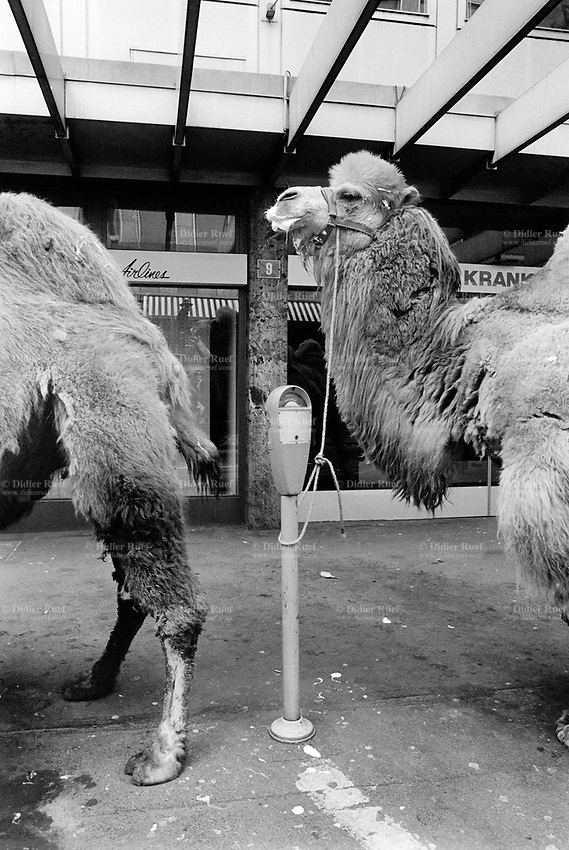 "Switzerland. Zürich. Camels tied up to parking meters before the start of the parade for the ""Sechseläuten"" which celebrates the end of the winter.  © 1991 Didier Ruef"