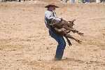 A cowboy flips a calf during calf roping. Jordan Valley Big Loop Rodeo, Ore.