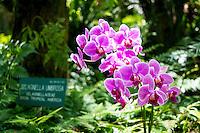 Purple orchids in the sunlight at Hawai'i Tropical Botanical Garden, Onomea, Big Island of Hawaiʻi.