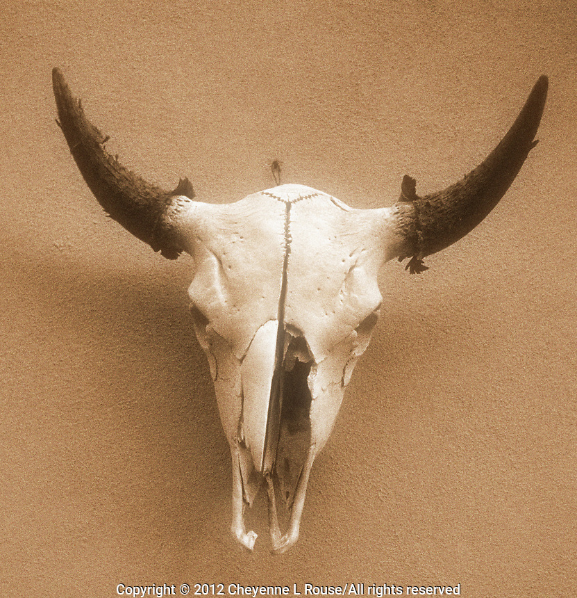 Ghost cow skull - Santa Fe, New Mexico - Sepia