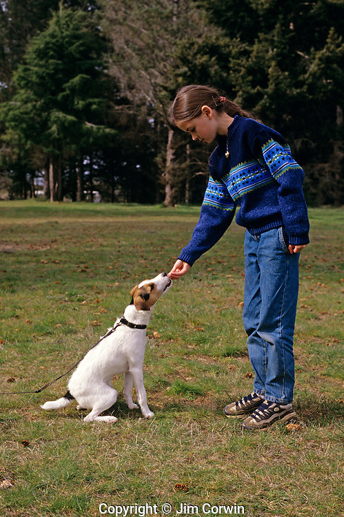 Jack Russell Terrier with young girl in park training a young dog to sit and stay and rewarding dog for good behavior