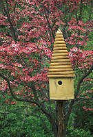 Pink dogwood with birdhouse