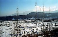 Snow covered step farming field in Kashmir valley. Srinagar. Kashir valley, India