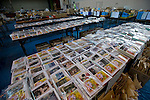 Around 45,000 photographs and other belongings that were salvaged from the debris in the 6 months following the March 11 tsunami are laid out for survivors to search through at a repository that was formerly a school gym in Ishinomaki, Miyagi Prefecture on 10 Sept. 2011.  Photograph: Robert Gilhooly