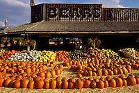 Fresh Pumpkin and Squash Harvest Display at Farmer's Market for Hallowe'en, Keremeos, BC, Similkameen Valley, British Columbia, Canada