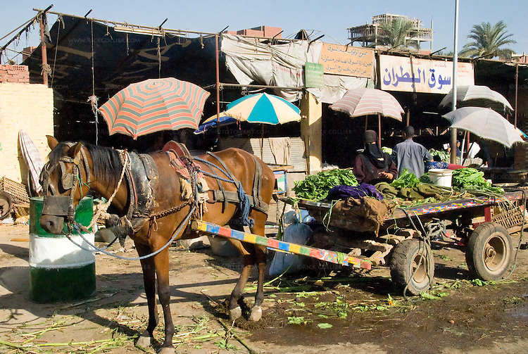 Cairo, Egypt -- Locals shop for food at a bazaar on the outskirts of Cairo. © Rick Collier / RickCollier.com