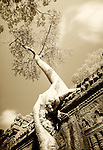 Preah Khan, Cambodia Infrared Image of Tree Roots Engulfing Ruins