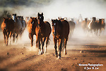 A photo of a cowboy herding horses.