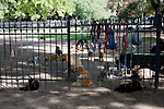 Buenos Aires, Argentina - An Area of a public park in downtown Buenos Aires is fenced off for dogs