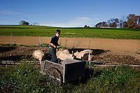 Bernville, Pennsylvania, October 24, 2014 - A portrait of Lena Schaeffer, owner of Dove Song Dairy in Berks County. Dove Song is an organic, family-run goat creamery employing over 200 Nubian, La Mancha and Alpine goats. The goats are pastured year around and fed a diet of barley, spelt and sunflower seeds from on the farm mixed with flax, kelp and minerals. The family has a country store on premises where they sell their yogurt, cheeses, duck and chicken eggs, milk and hand made soaps along with items from other local farmers.