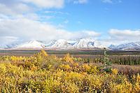 Broad Pass fall colors, Denali National Park, Alaska