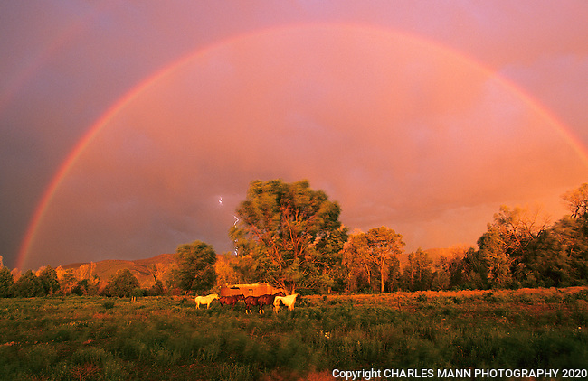 A rainbow and bolt of lightning frames a small herd of horses near Taos pueblo during a late summer storm.