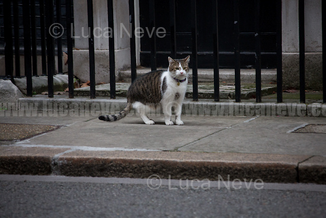 Larry (10 Downing Street cat and Chief Mouser to the Cabinet Office).<br />