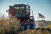 Gamer harvest corn in a filed beside and American flag.