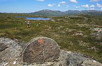 Kvernsteinsdriften var storindustri i Selbu før i tiden. Fra Høgfjellet, Skarvene og Roltdalen nasjonalpark. Skarvene med Storskarven (Tjohkele) i bakgrunnen. Foto: Bente Haarstad Kvernstein.