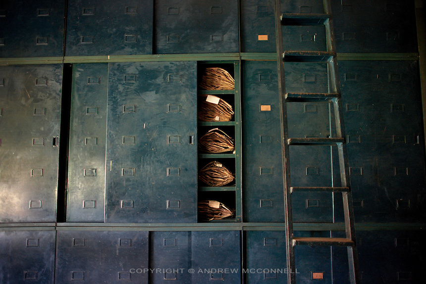 The Herbarium, containing over 100,000 plant specimens, in Yangambi, DR Congo, on Saturday, Dec. 6, 2008. Every specimen in the Herbarium is at least 50 years old and was collected by Belgians from all over Congo, Rwanda and Burundi. It represents a complete survey of everything in the Congo but unfortunately much of the animal collection has been lost or stolen. .Yangambi Research Station is the former Belgian headquarters for all major scientific ecological, biological and agricultural research in Africa between the 1930's and 1960. Abandonment began in 1960 with independence and although Congolese attempted to maintain Yangambi, sometimes in co-operation with the Belgians, the facility began to fall into disrepair through the 70's and 80's. War in the 1990's halted all potential for progress and for the past decade a skeleton crew has made a futile attempt to stave off further decline.