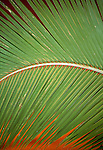 Detail of a palm frond, Bora Bora, French Polynesia