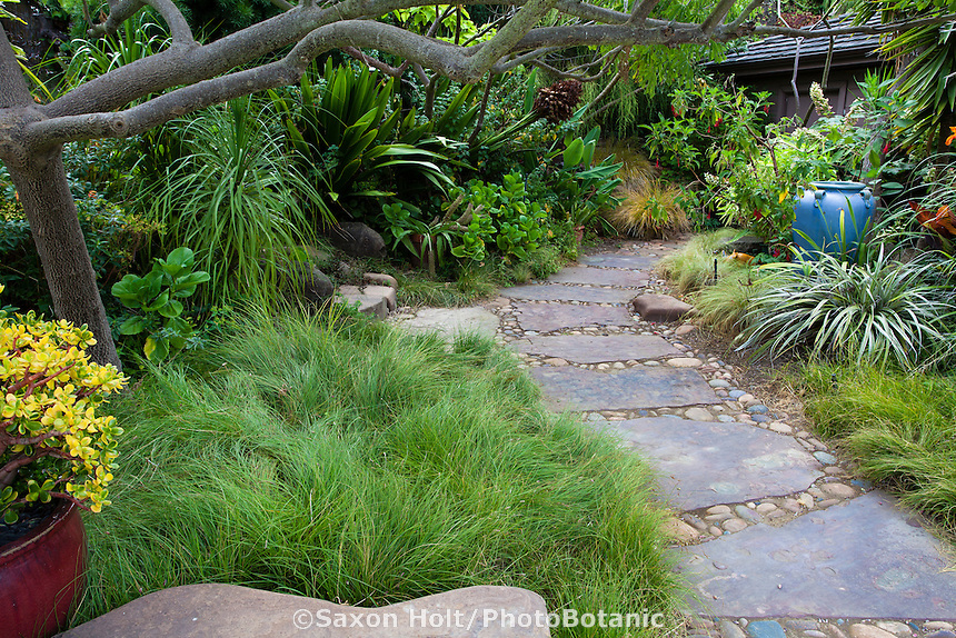 Stepping stone walkway through California backyard garden toward house with Carex pansa meadow lawn substitute and foliage borders; Sherry Merciari garden