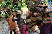 Collecting coconuts, one of the main staples of the diet, on Han Island, Carteret Atoll, Papua New Guinea, on Sunday, Dec. 10, 2006.  Rising sea levels have eroded much of the coastlines of the low lying Carteret islands (situated 80km from Bougainville island, in the South Pacific), and waves have crashed over the islands flooding and destroying what little crop gardens the islanders have. Food is in short supply, banana and swamp taro crops are failing due to the salt contamination of the land, and the islanders live on a meagre one meal per day diet of fish and coconut. There is talk by the Autonomous Region of Bougainville government to relocate the Carteret Islanders to Bougainville island, but this plan is stalled due to a lack of finances, resources, land and coordination.