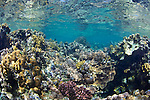 Reef and coral of Red Sea, Sudan