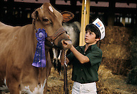 A 4H young boy, shows off blue ribbon award dairy cow at the county country fair