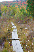 Puncheons (bog bridges) on trail near Wildlife Pond in Bethlehem, New Hampshire USA during the autumn months