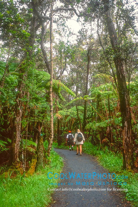 hikers, walking on trail in rainforest of tree fern, Hapuu, Cibotium sp., and Ohia Lehua, Metrosideros polymorpha, Hawaii Volcanoes National Park, Kilauea, Big Island, Hawaii, USA, MR