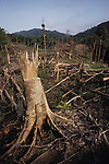 Slash &amp; Burn cultivation Dayak Habitation Sarawak