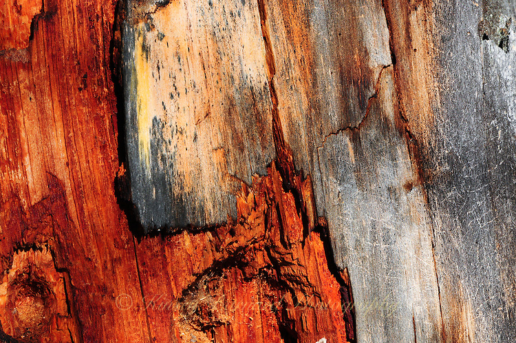 &quot;WOUNDED TREE<br /> <br /> Wounded tree trunk makes for special natural designs.