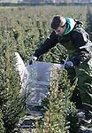 Foto: VidiPhoto<br /> <br /> KAATSHEUVEL - Ook in de winter zijn er volop werkzaamheden te verrichten bij Kwekerij 't Plantloon van Johan van der Velden uit het Brabantse Kaatsheuvel. Van der Velden is gespecialiseerd in groene hagen.