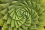 Succulent, California