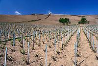 vineyards, France, Bourgogne, Solutre, Burgundy, Saone-et-Loire, Europe, Beaujolais Wine Region, Scenic view of the vineyards in the Beaujolais Wine Region in Solutre in the early spring.