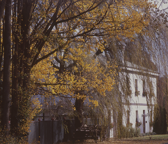 Autumn Leaves<br /> Clunes