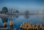 Idaho, West Central, New Meadows. Morning sun burns through fog with a barn and pond in spring.