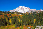 Paradise Inn and fall color under Mount Rainier, Mount Rainier National Park, Washington