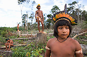 Large parts of rainforests in the Amazon Basin have been destroyed and transformed into farmland, Brazil. Here Xingu Indian boys stand amid stumps of recently cut rainforest trees.