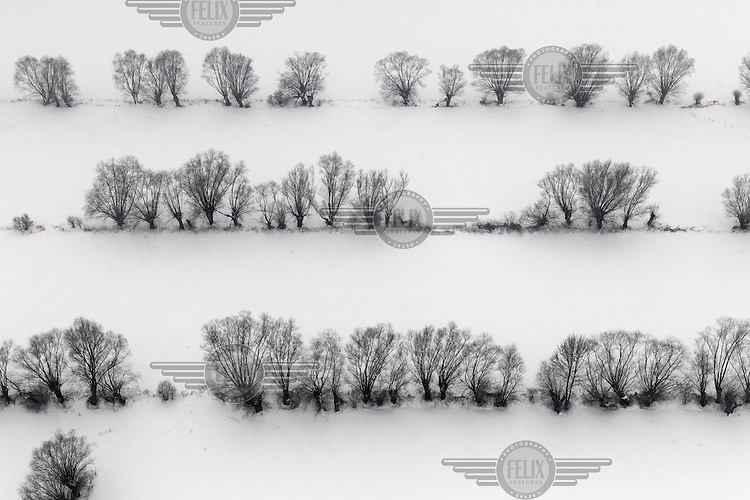Lines of trees surrounded by snow near the Vistula River in Grudziadz.