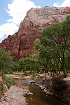 USA Utah, Zion National Park. The Grotto land form, with cottonwood trees along the Virgin River.