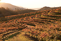Wine - USA, California