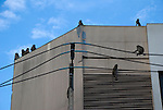 Monkeys sit on top of building roof in downtown