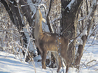 deer,eagles,bees,butterfly,blue heron birds,chickadee,