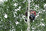 Tall Trees A Tree Service Company.