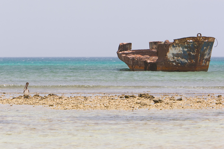 A lone pelican rests on a sandbar with an old shipwreck in the distance.  This view of the Aruban coast was taken in May of 2007.