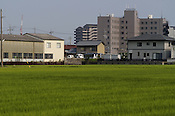 A Japanese agricultural and suburban scene. It is quite common for rice fields and suburban developments to be in such proximity in Japan