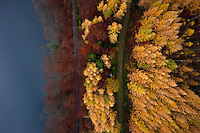 A view of a forest in the edge of a lake with the tress changing colour in Autumn in Kashubia.