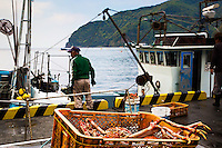 Crab harvest, fisherman, Hedo Port, Izu Peninsula, Japan